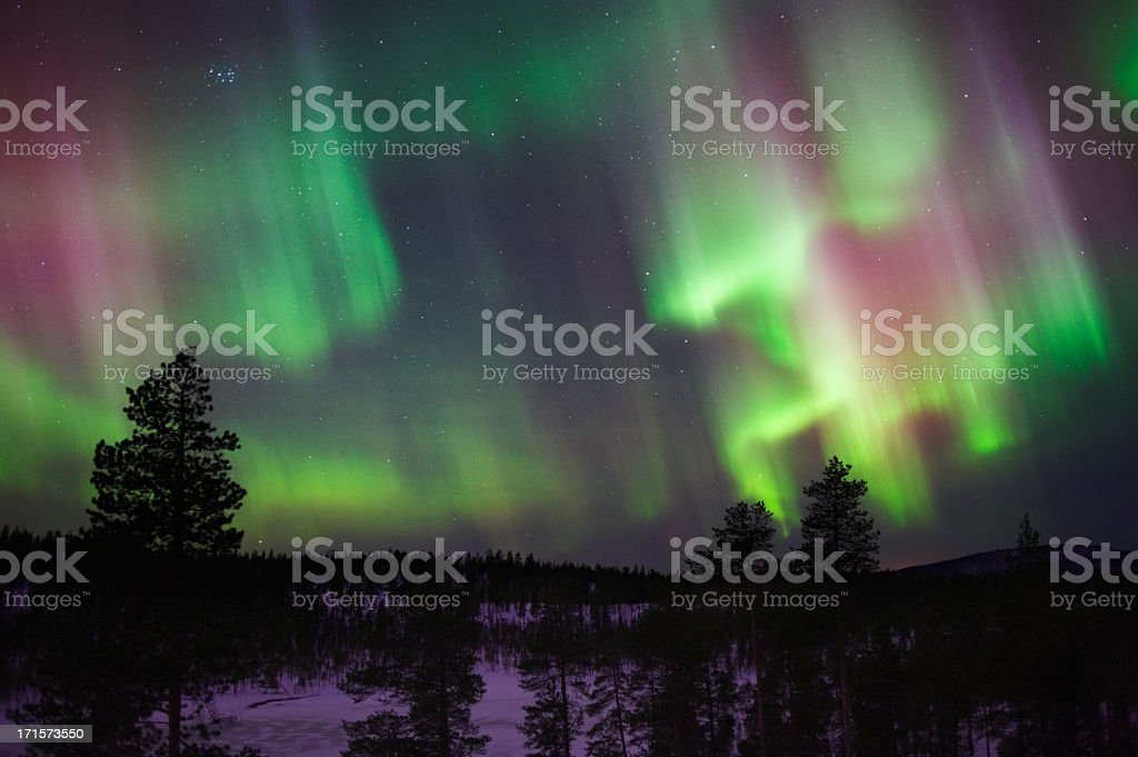 Silhouette of trees under the bright Northern Lights stock photo