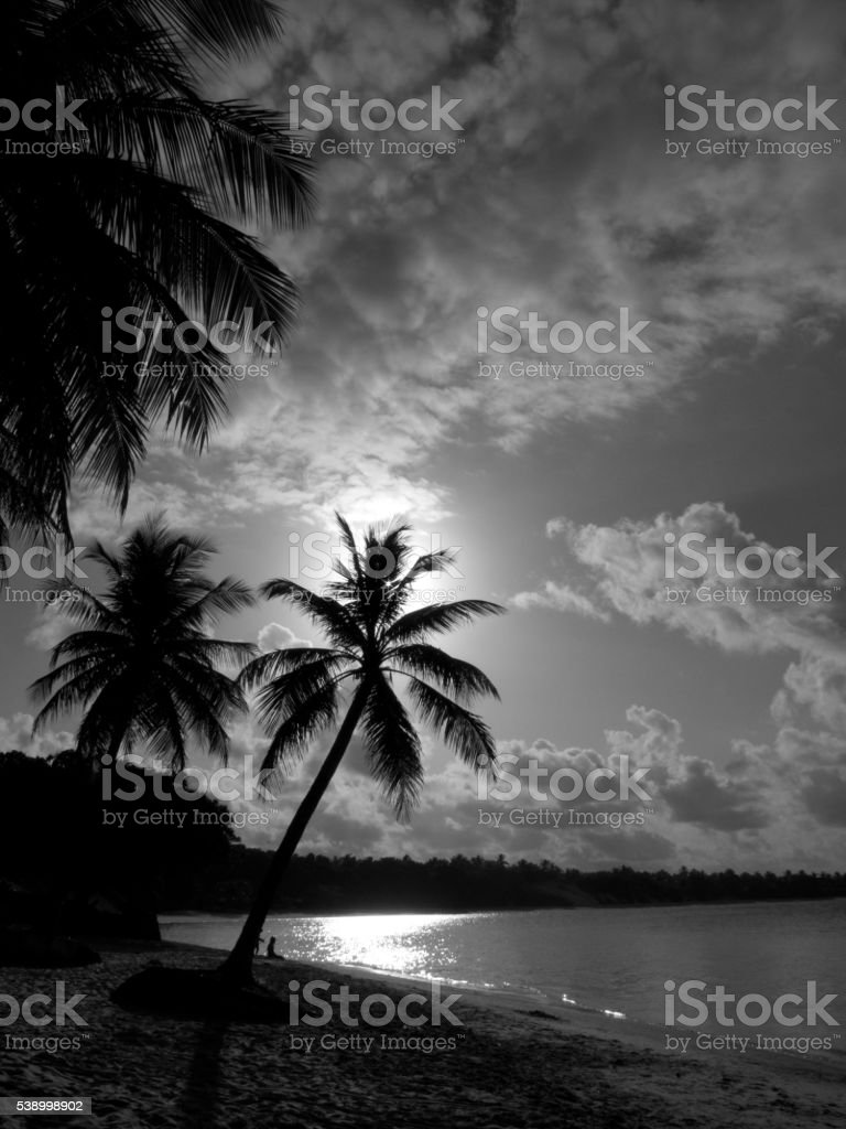 Silhouette of two Coconut Trees on a tropical warm beach - foto de acervo