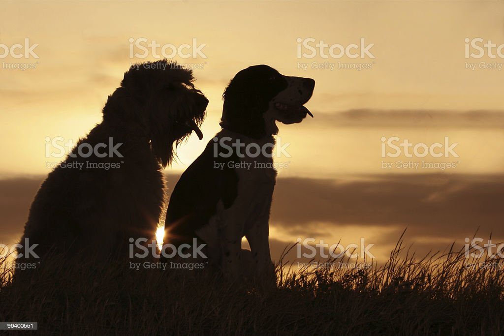 Silhouette of two dog friends in the sunset - Royalty-free Animal Stock Photo