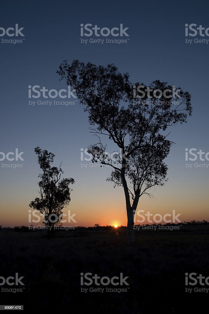Silhouette of Two Gum Trees royalty-free stock photo