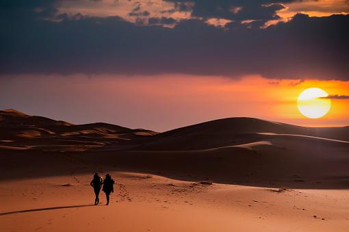 Wild Camels in the Desert . Desert landscape with camel .
