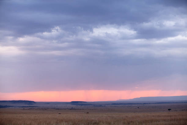 Silhouette of wildebeest moving in Masai Mara wildlife century stock photo