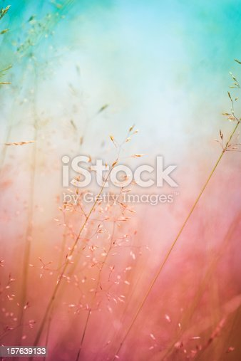 istock Silhouette of wildflowers in meadow during sunrise or sunset 157639133