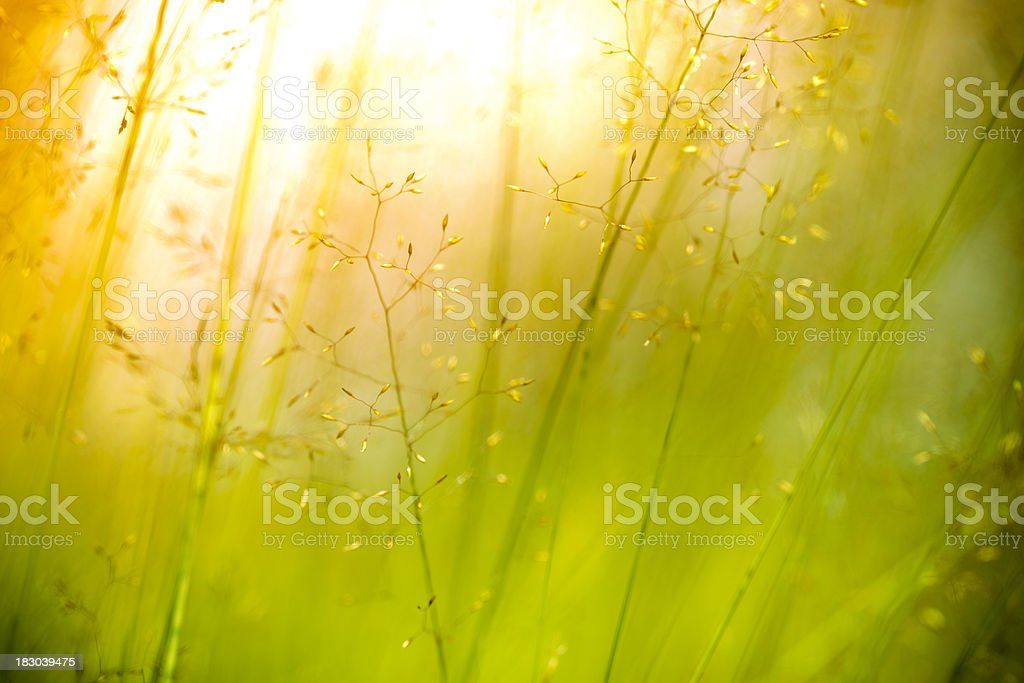 Silhouette of wildflowers in meadow during sunset royalty-free stock photo