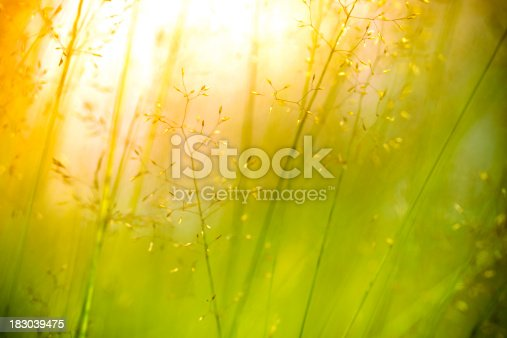 istock Silhouette of wildflowers in meadow during sunset 183039475