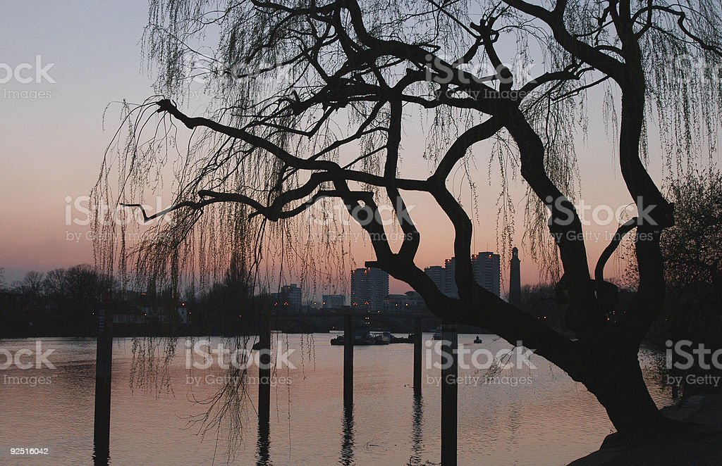 silhouette of willow stock photo