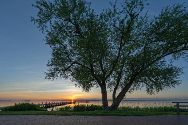 Silhouette of willow tree at majestic sunsetat lake stock photo