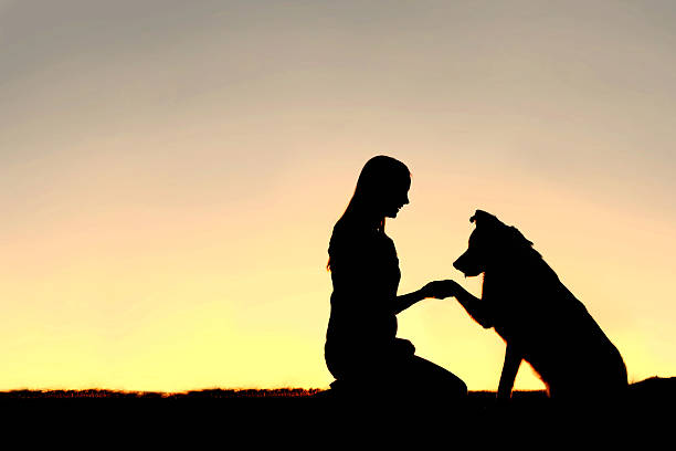 Silhouette of Young Woman and Pet Dog Shaking Hands stock photo
