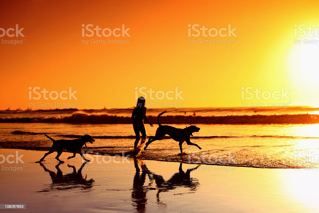 Silhouette of Young Woman with Two Dogs on Beach stock photo