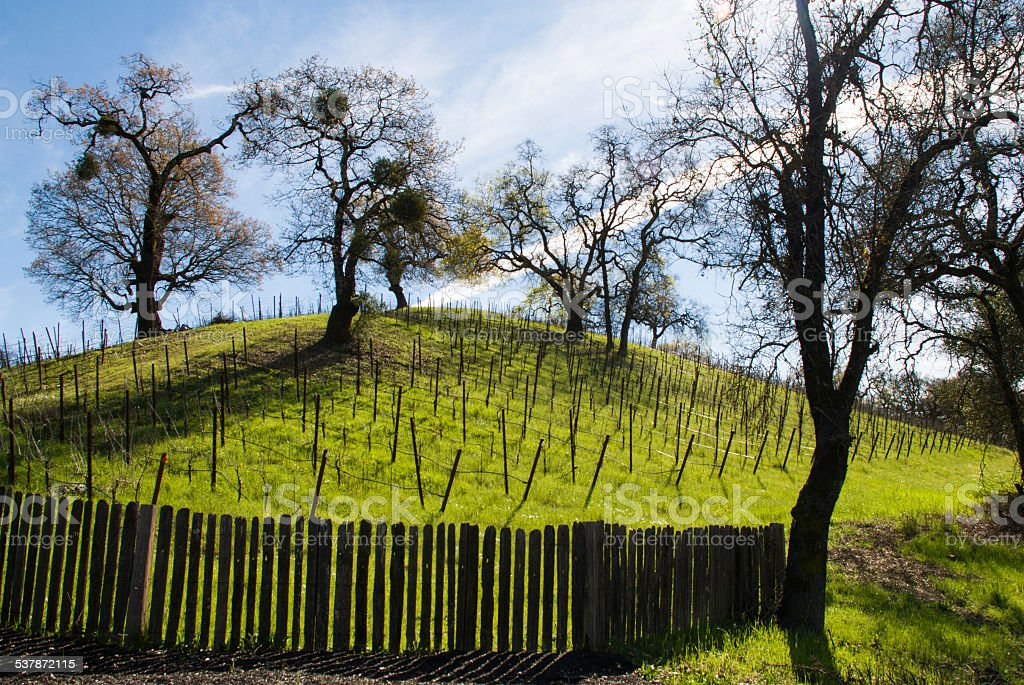 Silhouette old fence Oak Trees Hilltop Vineyard Sonoma County California stock photo