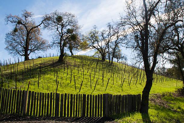 silhouette alte zaun eichen hügel und weinberge von sonoma county, kalifornien - robert weinberg stock-fotos und bilder