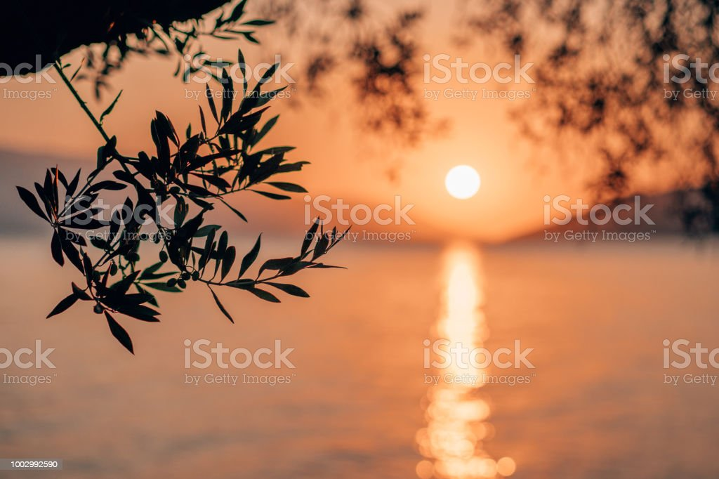 Silhouette olive tree branch in morning warm sunrise light. Sun shape above Mediterranean sea. Sun ray reflection bokeh beams on rippled water surface in early hours stock photo