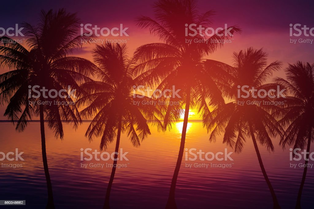 silhouette palm tree and sea at sunset summer nature background stock photo