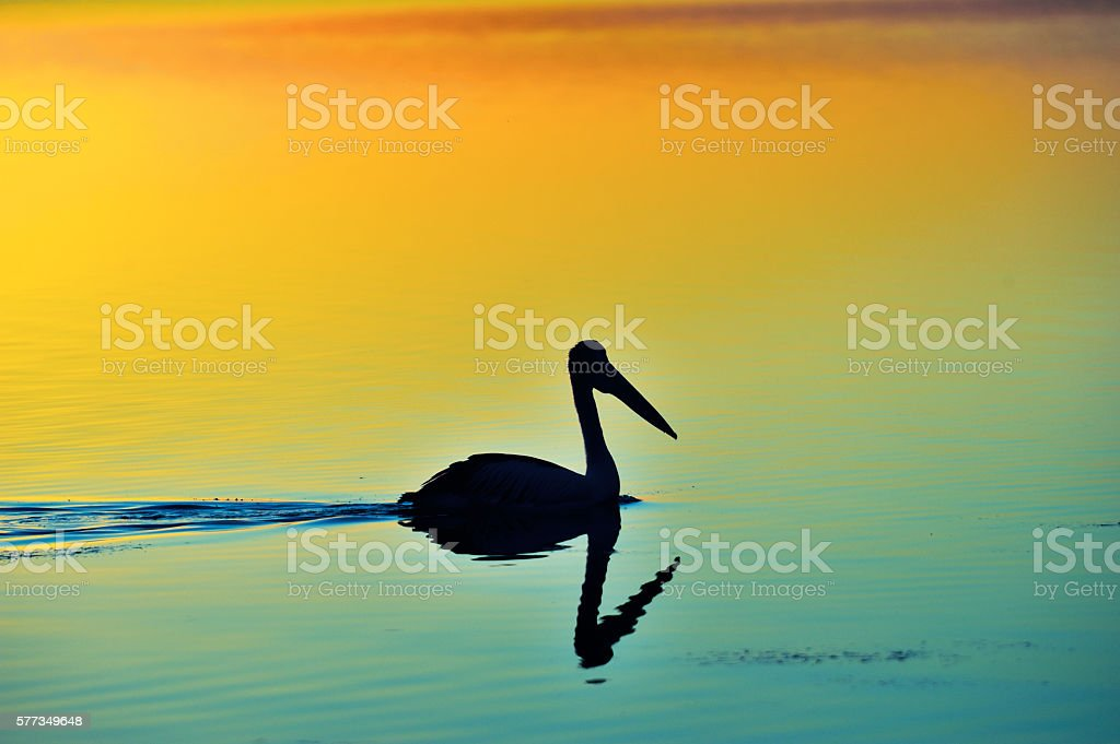 Silhouette Pelican stock photo