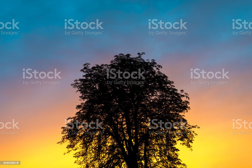 silhouette photo of a tree against a sunset background stock photo