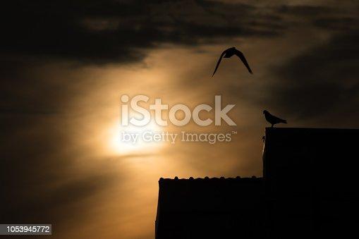 istock silhouette photo of bird on building 1053945772