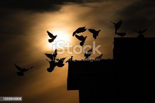 istock silhouette photo of bird on building 1053945908