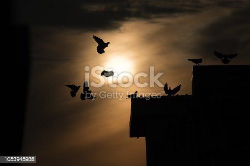 istock silhouette photo of bird on building 1053945938