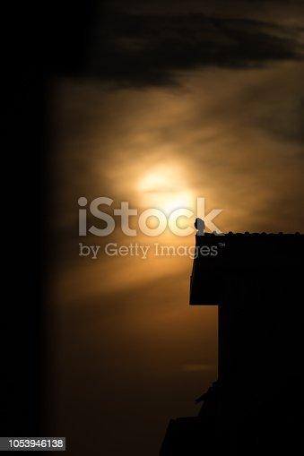 istock silhouette photo of bird on building 1053946138