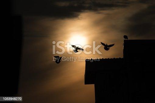 istock silhouette photo of bird on building 1053946270