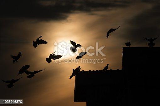 istock silhouette photo of bird on building 1053946370