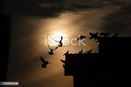 istock silhouette photo of bird on building 1053946436