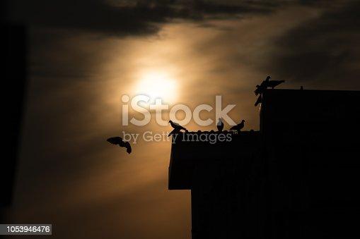 istock silhouette photo of bird on building 1053946476