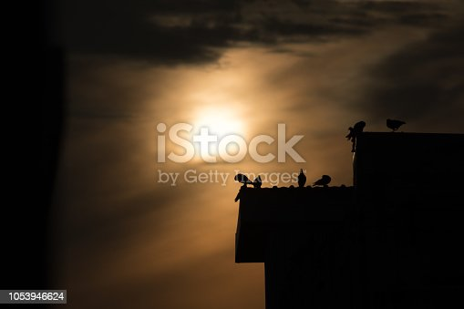 istock silhouette photo of bird on building 1053946624