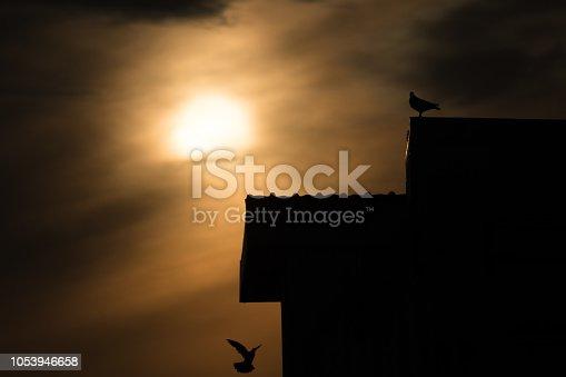 istock silhouette photo of bird on building 1053946658