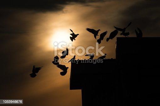 istock silhouette photo of bird on building 1053946676