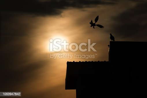 istock silhouette photo of bird on building 1053947842
