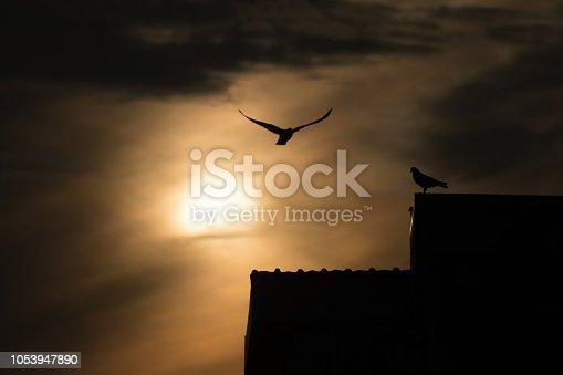istock silhouette photo of bird on building 1053947890