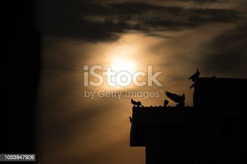 istock silhouette photo of bird on building 1053947926