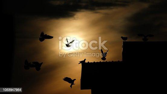 istock silhouette photo of bird on building 1053947954