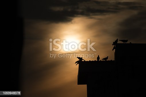istock silhouette photo of bird on building 1053948378