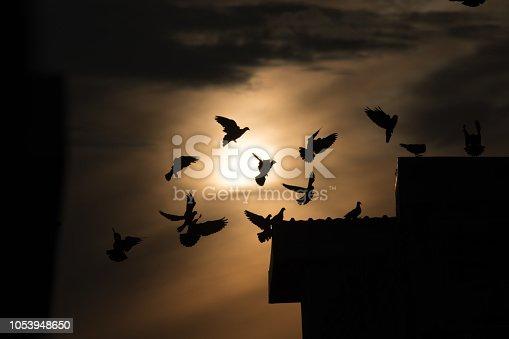 istock silhouette photo of bird on building 1053948650