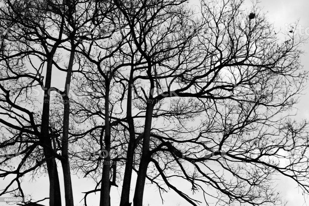 silhouette photo of tree royalty-free stock photo