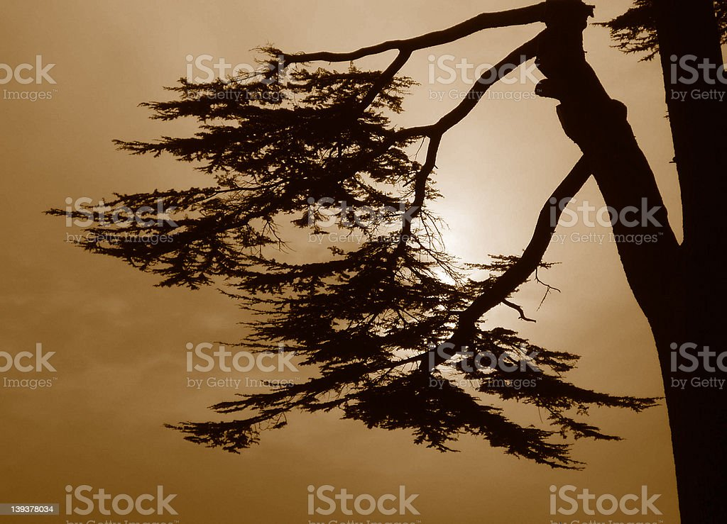 silhouette royalty-free stock photo