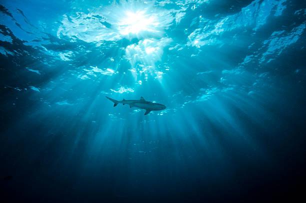 silueta - shark fotografías e imágenes de stock