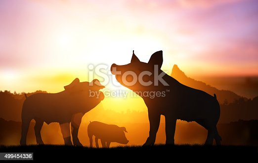 istock silhouette pig in sunset 499454336