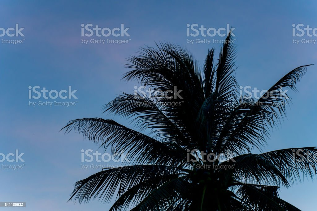 Silhouette scene of palm tree with sunset sky stock photo