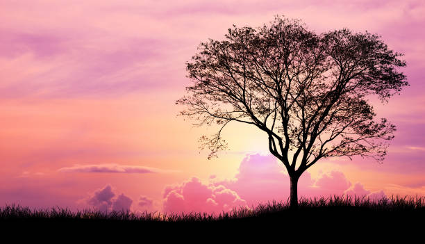 silhouette tree and grass in pink purple sky cloud background - county clare stock pictures, royalty-free photos & images