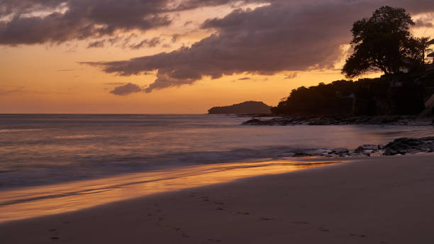 Silhouette tree at sunset on the beach Playa Cacique of Contadora island stock photo