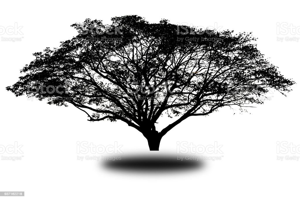 silhouette tree Isolated on white background stock photo