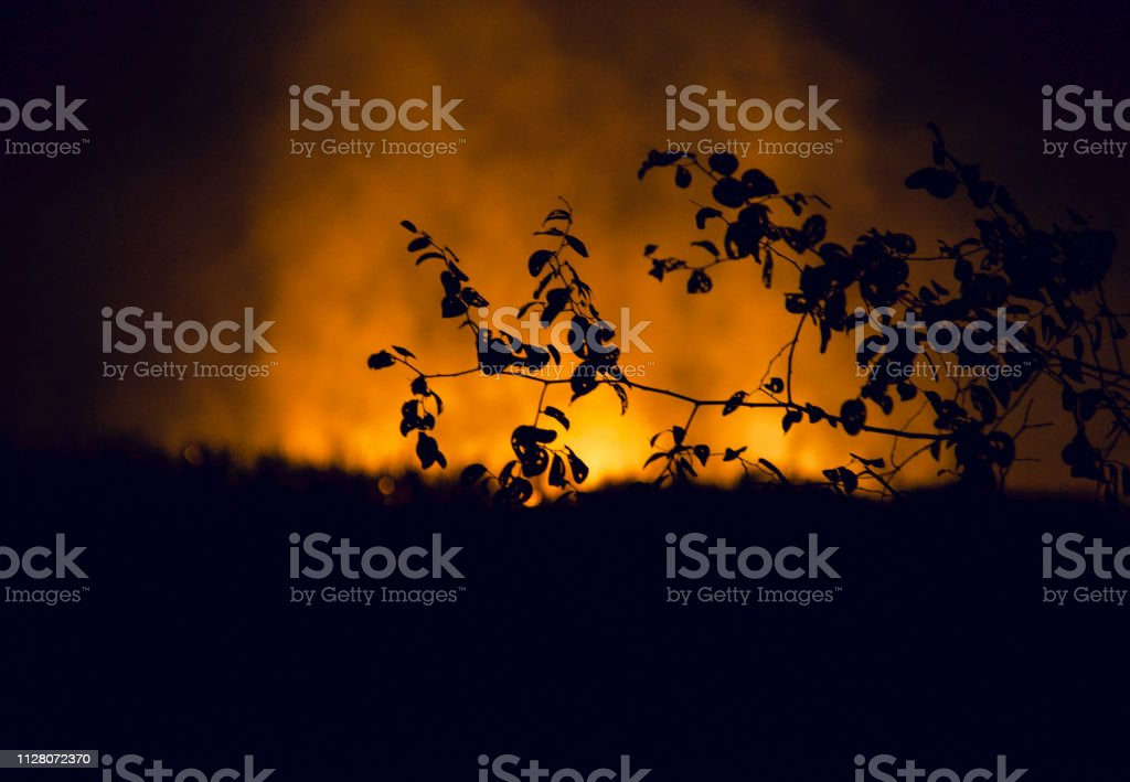 Silhouette tree leaves with fire smoke background photo stock photo