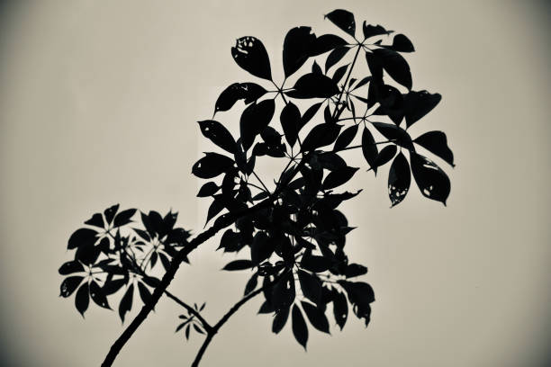 Silhouette tree leaves with sky background photo stock photo