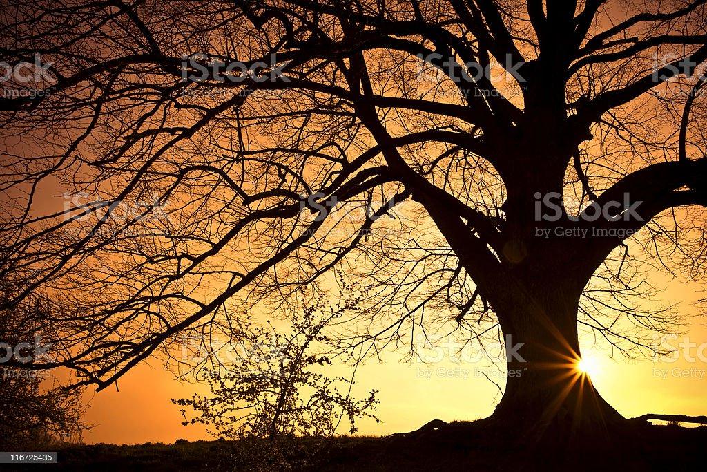 Silhouette Tree royalty-free stock photo