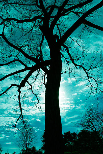 Silhouette Tree Silhouetted tree disjointed stock pictures, royalty-free photos & images