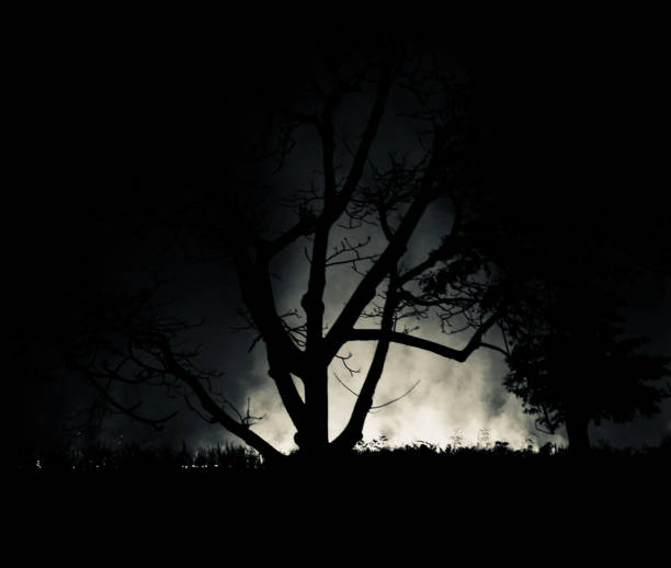 Silhouette trees around a forest at night stock photo