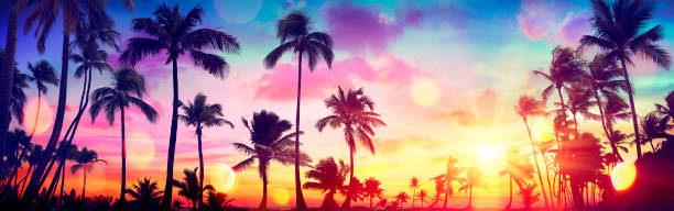 Silhouette Tropical Palm Trees At Sunset - Summer Vacation With Vintage Tone And Bokeh Lights stock photo